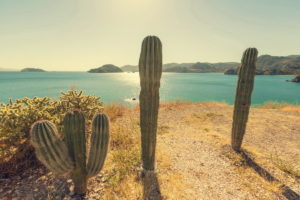 Trend Travel Yachting Mexico Baja California - Kakteen