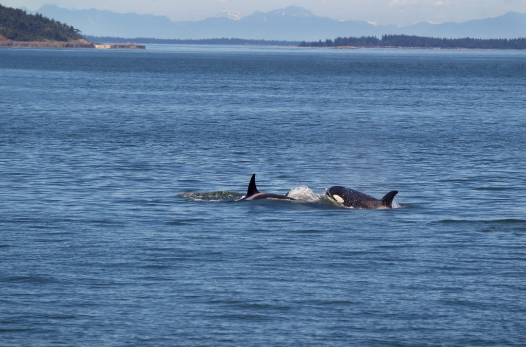 Trend Travel Yachting, Orcas, San Juan Islands