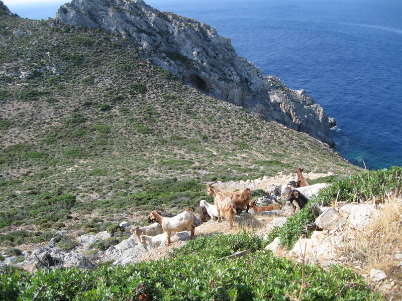 Trend Travel Yachting Charter Türkei Ziegen
