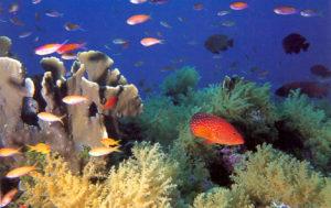 Trend Travel Yachting - unterwasserwelt_stpierre