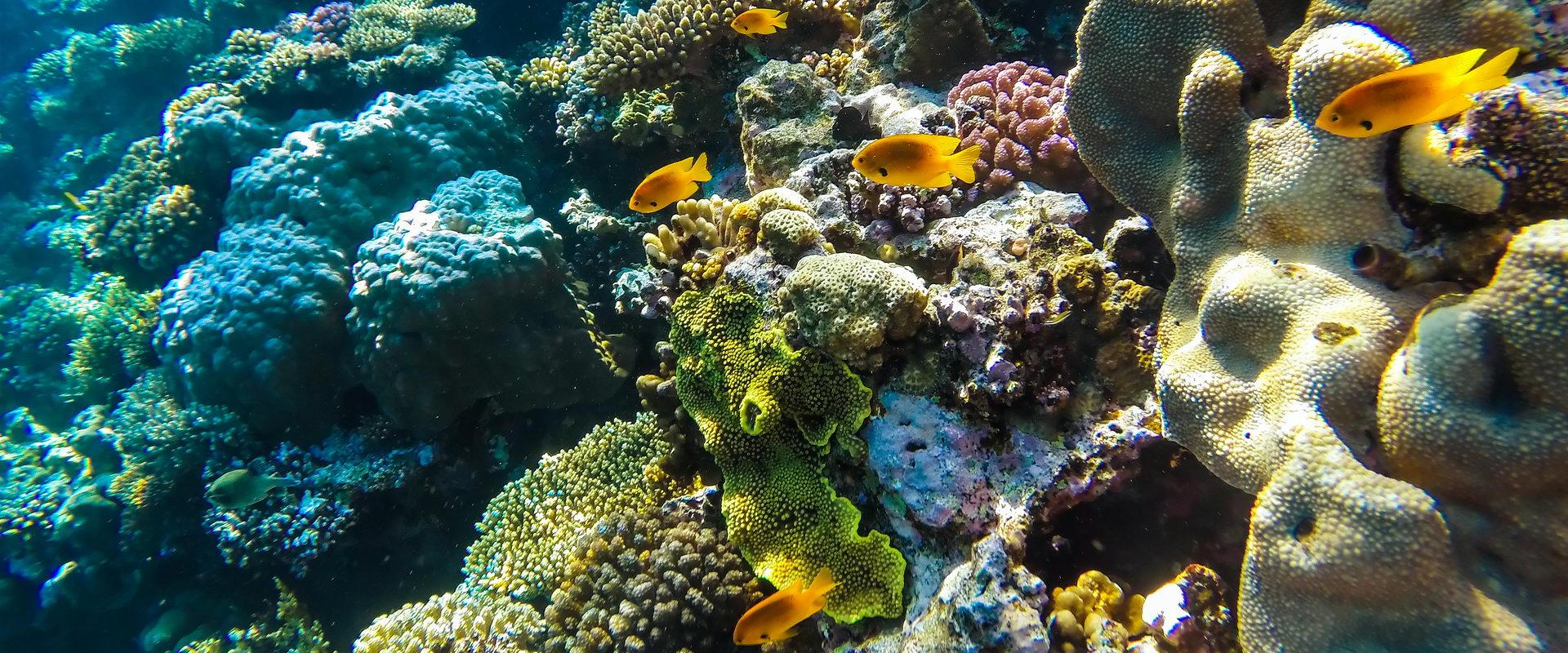 Trend Travel Yachting Kabinencharter, Mitsegeln und Schnorcheln, die Unterwasserwelt erleben