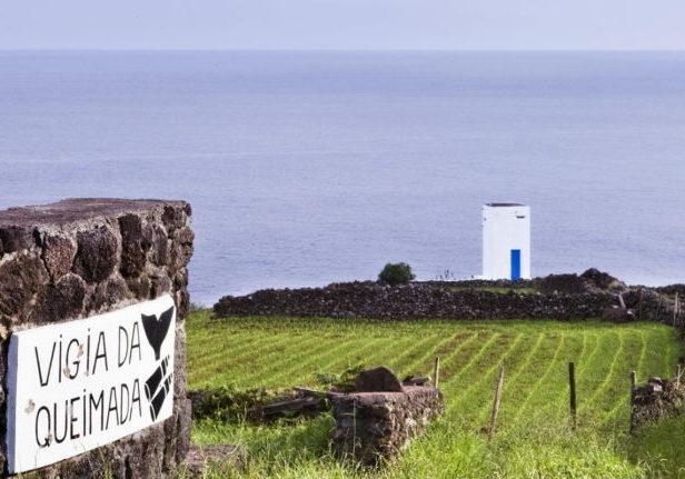 Trend Travel Yachting, Yachtcharter Azoren - Titelbild - Pico